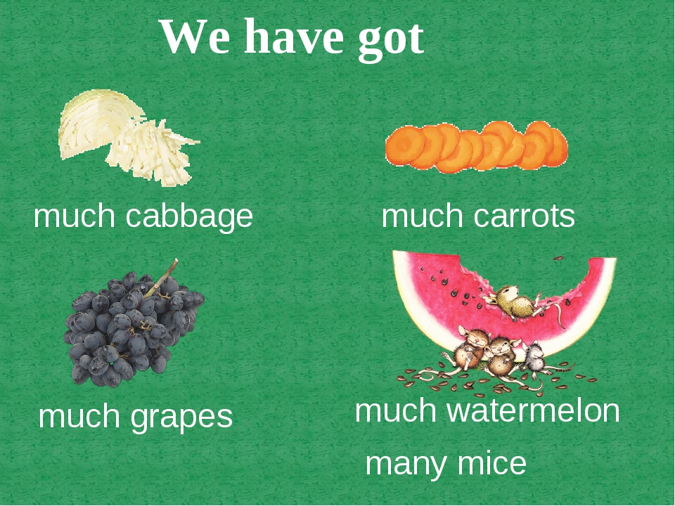 much cabbage much carrots much grapes much watermelon many mice We have got