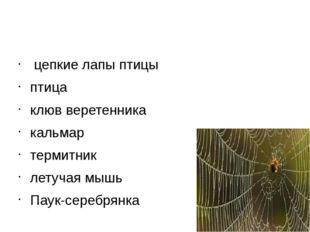 цепкие лапы птицы птица клюв веретенника кальмар термитник летучая мышь Пау