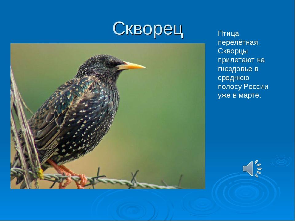 Птицы подмосковья в картинках с описанием что