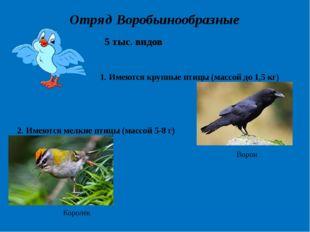 Отряд Воробьинообразные 5 тыс. видов 1. Имеются крупные птицы (массой до 1,5