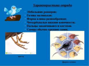 Характеристика отряда: Небольших размеров; Голова маленькая; Форма клюва разн