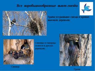 Все воробьинообразные вьют гнезда Грачи устраивают гнезда в кронах высоких де
