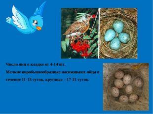 Число яиц в кладке от 4-14 шт. Мелкие воробьинообразные насиживают яйца в теч