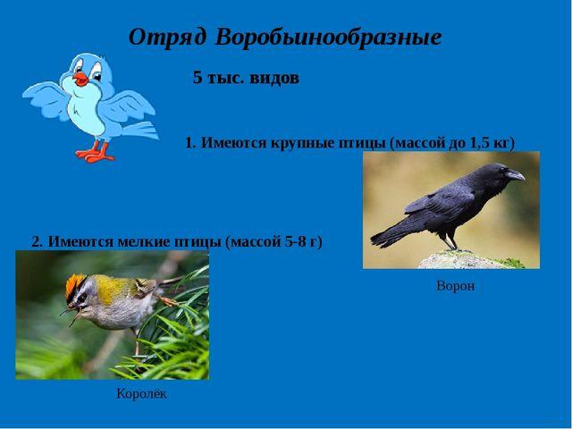 Отряд Воробьинообразные 5 тыс. видов 1. Имеются крупные птицы (массой до 1,5...