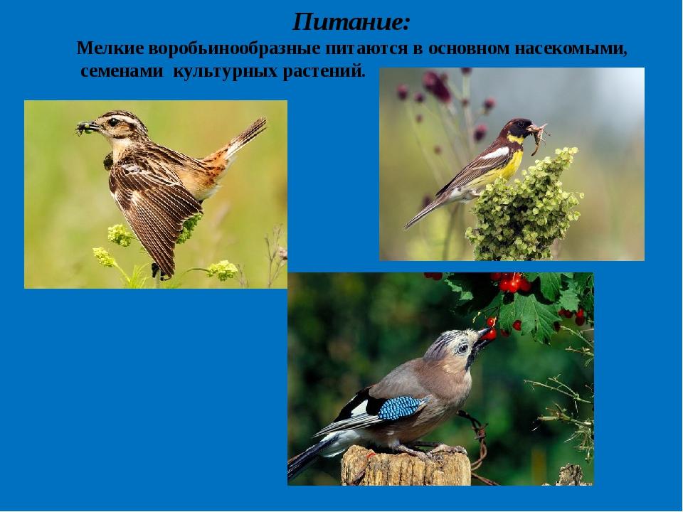Питание: Мелкие воробьинообразные питаются в основном насекомыми, семенами ку...