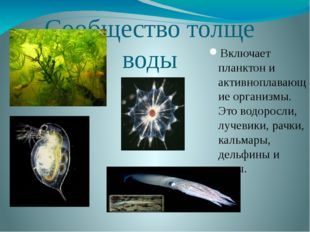 Сообщество толще воды Включает планктон и активноплавающие организмы. Это вод