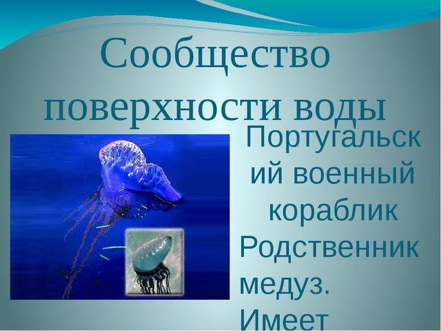 Сообщество поверхности воды Португальский военный кораблик Родственник медуз....