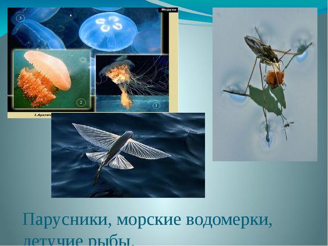 Парусники, морские водомерки, летучие рыбы.