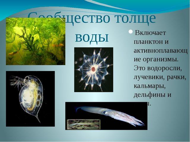 Сообщество толще воды Включает планктон и активноплавающие организмы. Это вод...