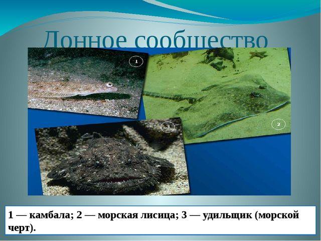 Донное сообщество 1 — камбала; 2 — морская лисица; 3 — удильщик (морской черт).