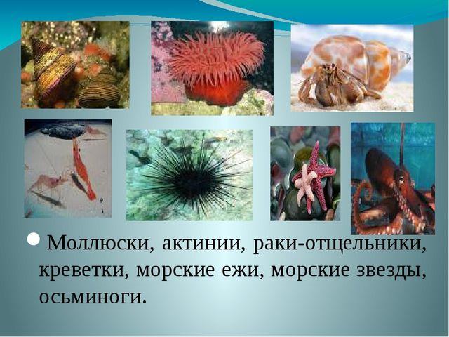 Моллюски, актинии, раки-отщельники, креветки, морские ежи, морские звезды, ос...