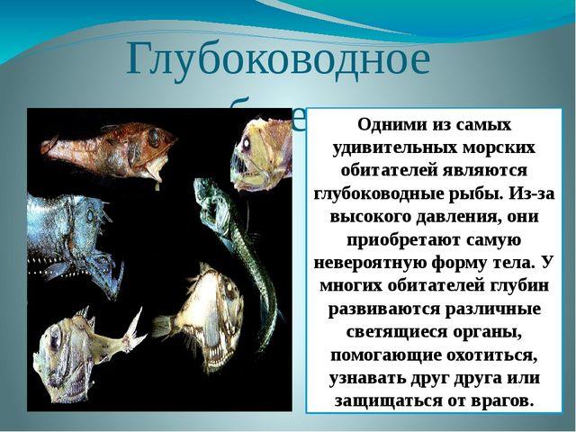Глубоководное сообщество Одними из самых удивительных морских обитателей явля...