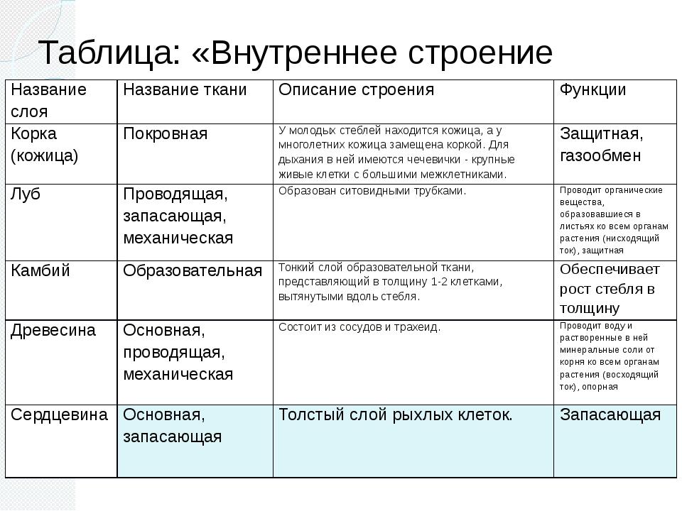 по по таблица строению стебля биологии гдз 6