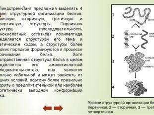 Четвертичная структура (или субъединичная, доменная) — взаимное расположение
