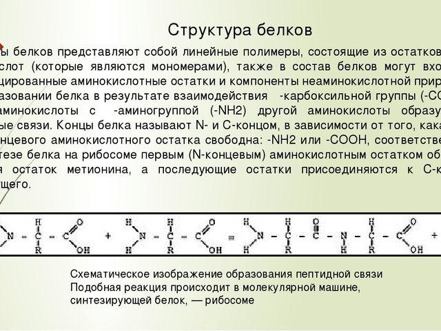 Белки в обмене веществ Большинство микроорганизмов и растений могут синтез...