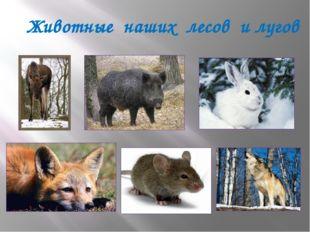 Животные наших лесов и лугов