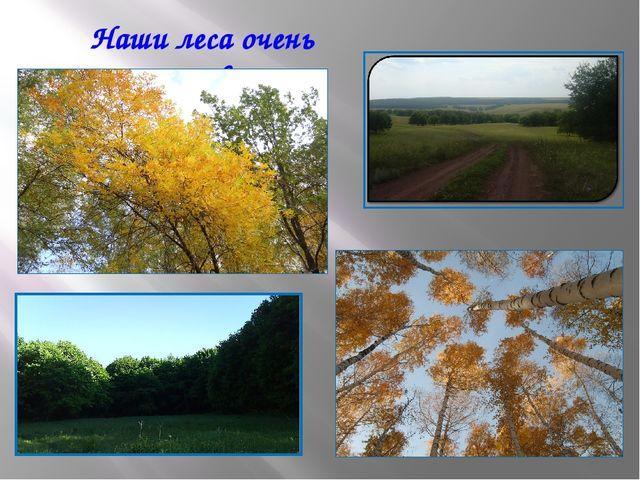 Наши леса очень красивые