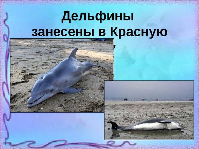 Дельфины занесены в Красную книгу