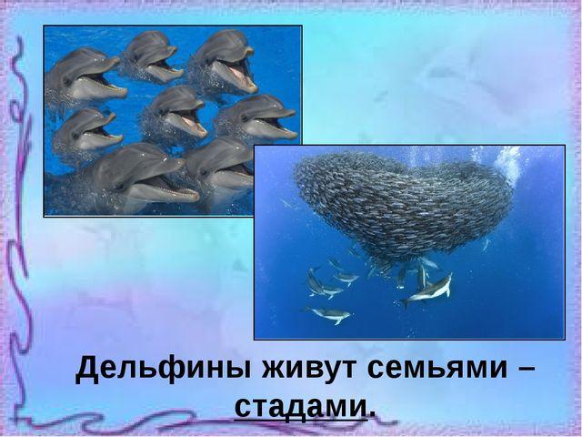 Дельфины живут семьями – стадами.
