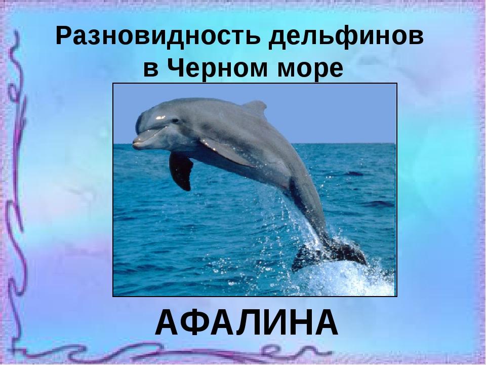 Разновидность дельфинов в Черном море АФАЛИНА