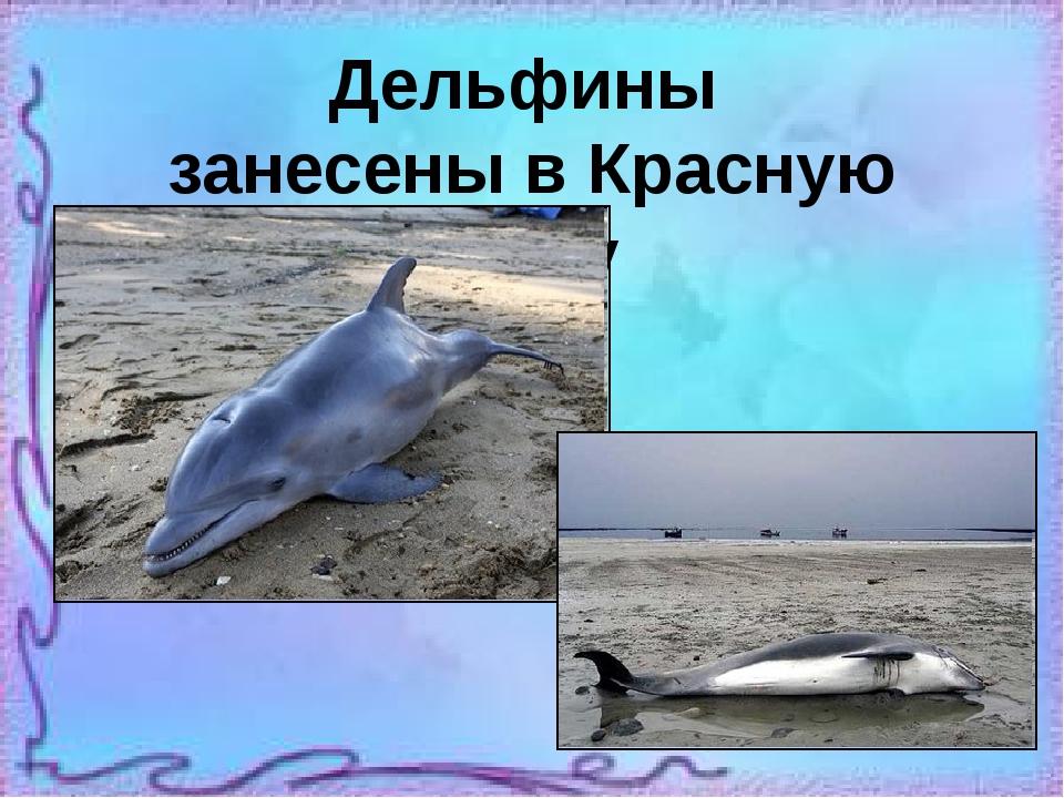 популярностью пользуются список дельфинариев в россии имеет