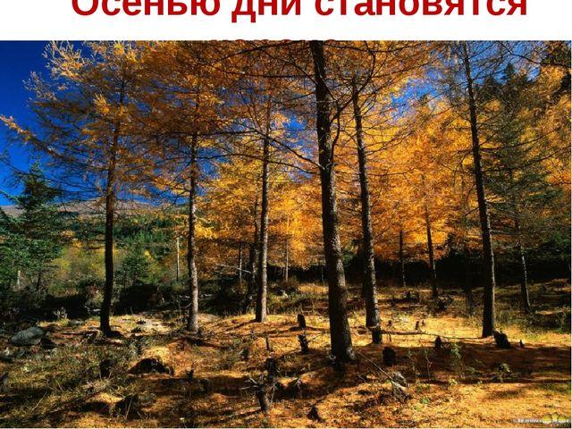Осенью дни становятся короче….