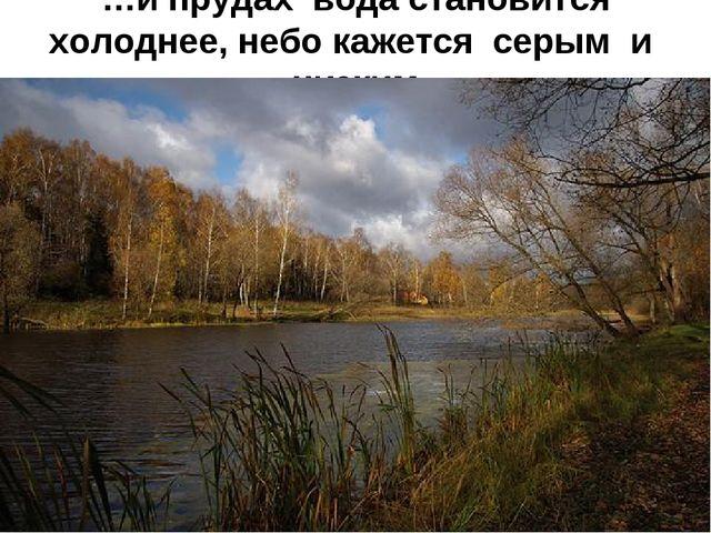 …и прудах вода становится холоднее, небо кажется серым и низким