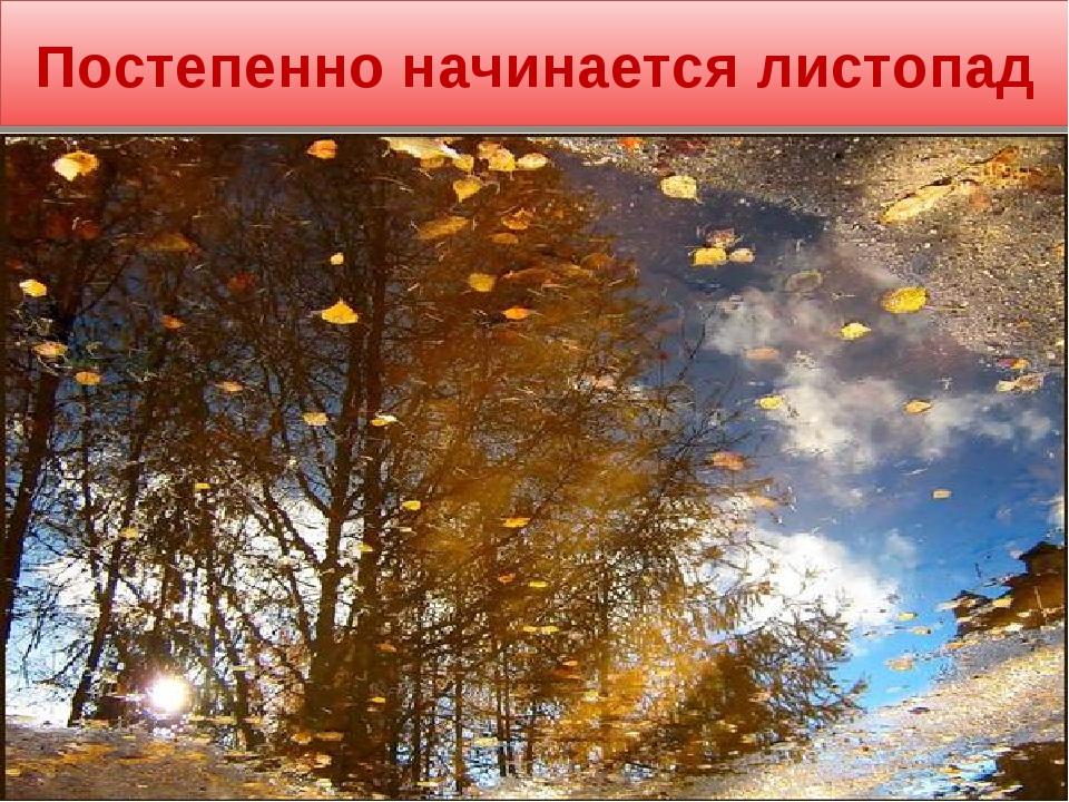 Постепенно начинается листопад