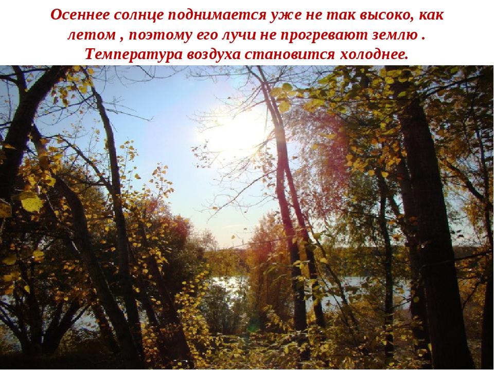 Осеннее солнце поднимается уже не так высоко, как летом , поэтому его лучи не...