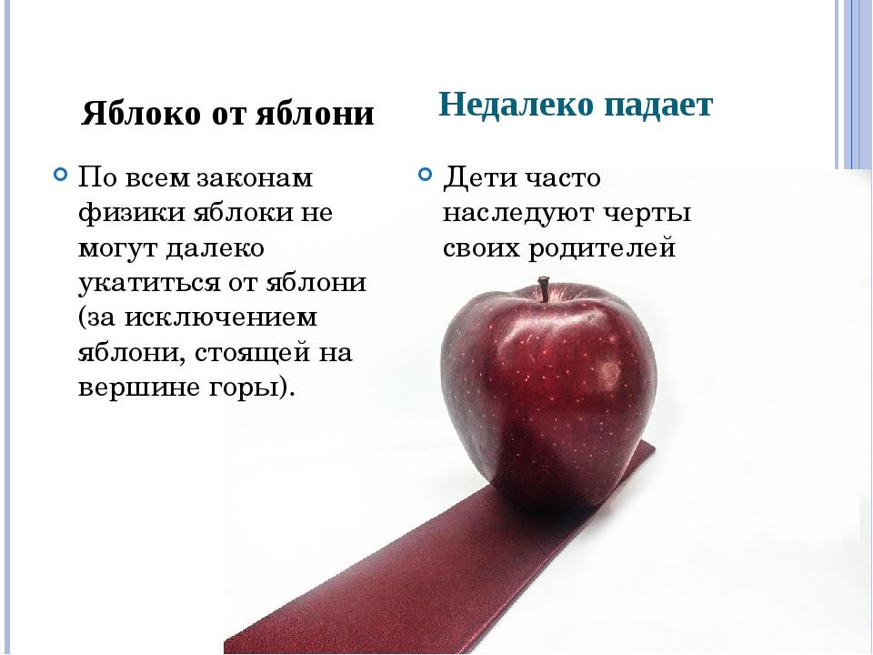 Недалеко падает По всем законам физики яблоки не могут далеко укатиться от яб...