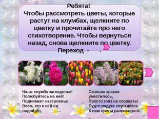 Ирис - радуга-цветок, Наш касатик милый, Или просто - петушок, - Всё равно к