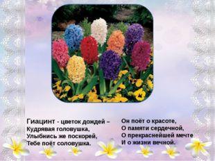 Астры - звездочки земли, В школьных грядках зацвели, Самым дивным разноцветь