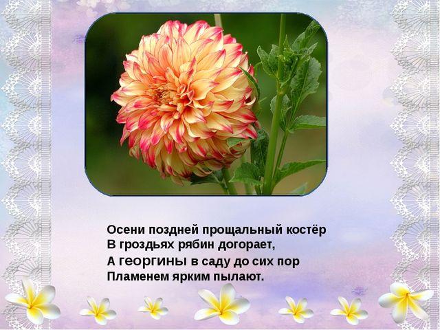 Анютины глазки - Цветочек из сказки, В них - вера, надежда, любовь. Анютины...
