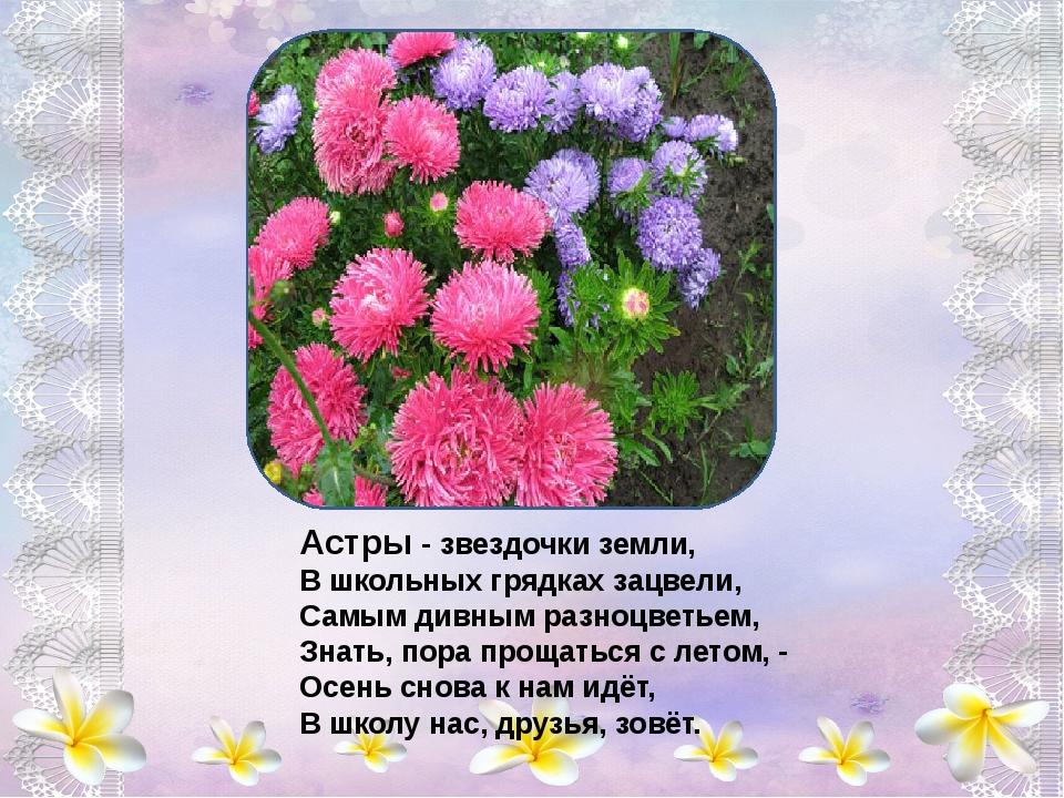 Колокольчики - цветы, пролески лесные, Вы - ровесники весны, нежно голубые,...