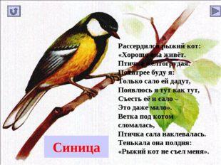 Синица Рассердился рыжий кот: «Хорошо она живёт. Птичка желтогрудая. Похитрее