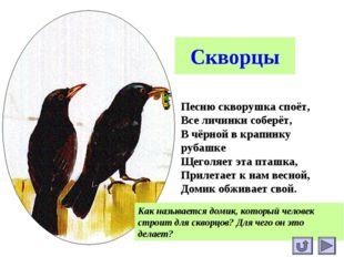 Скворцы Песню скворушка споёт, Все личинки соберёт, В чёрной в крапинку рубаш