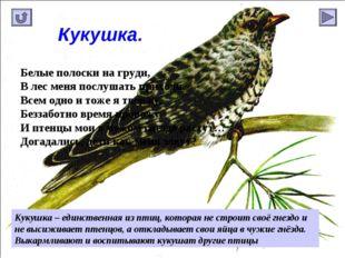 Кукушка. Кукушка – единственная из птиц, которая не строит своё гнездо и не в