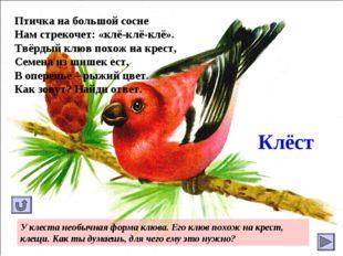 Клёст Птичка на большой сосне Нам стрекочет: «клё-клё-клё». Твёрдый клюв похо