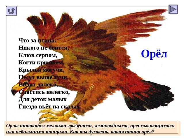 Орёл Что за птица: Никого не боится, Клюв серпом, Когти крючком, Крылья могуч...