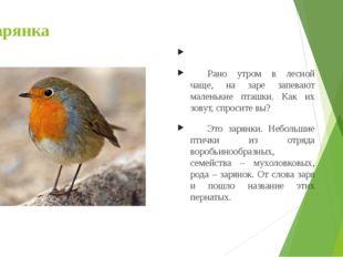Зарянка  Рано утром в лесной чаще, на заре запевают маленькие пташки. Как и