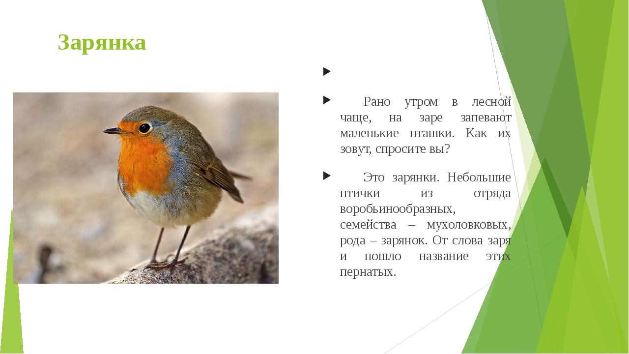 Зарянка  Рано утром в лесной чаще, на заре запевают маленькие пташки. Как и...