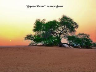 """Дерево Жизни"" на горе Дыма"