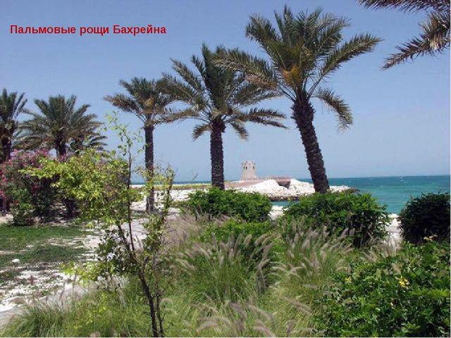 Пальмовые рощи Бахрейна