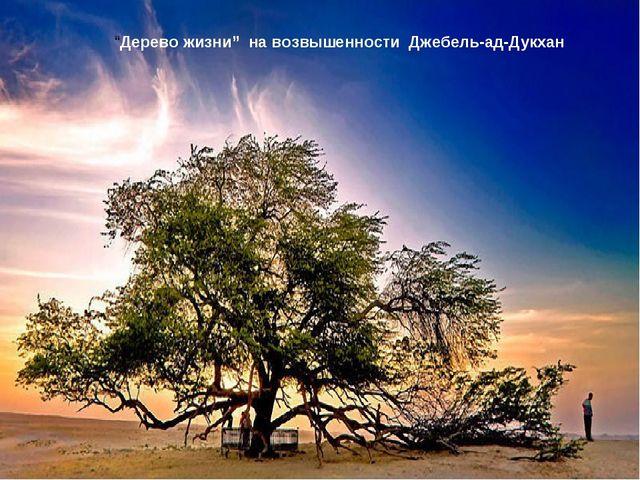 """""""Дерево жизни"""" на возвышенности Джебель-ад-Дукхан"""