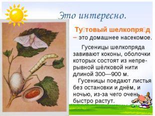 Это интересно. Ту́товый шелкопря́д – это домашнее насекомое. Гусеницы ше