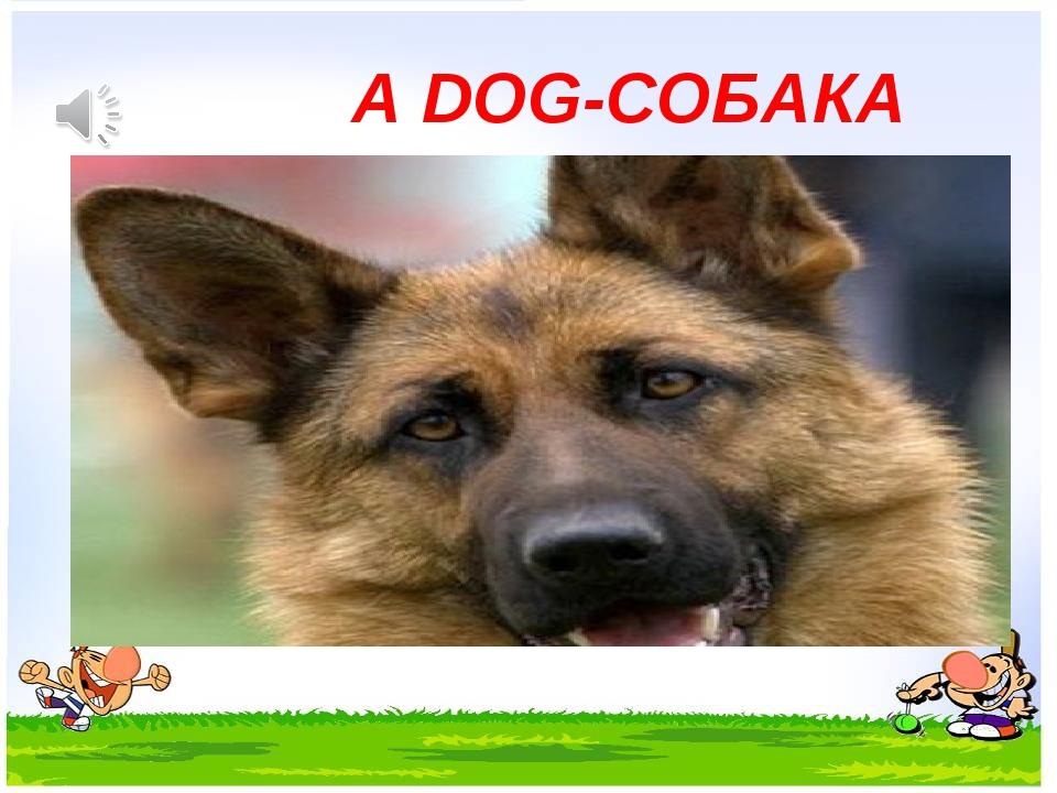 A DOG-СОБАКА