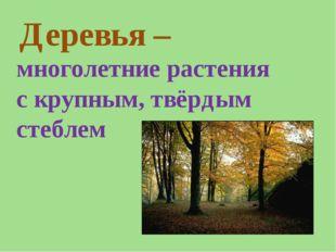 Деревья – многолетние растения с крупным, твёрдым стеблем