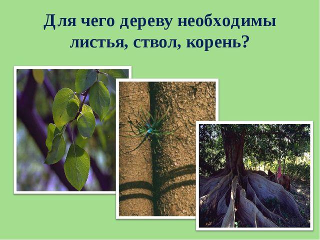 Для чего дереву необходимы листья, ствол, корень?