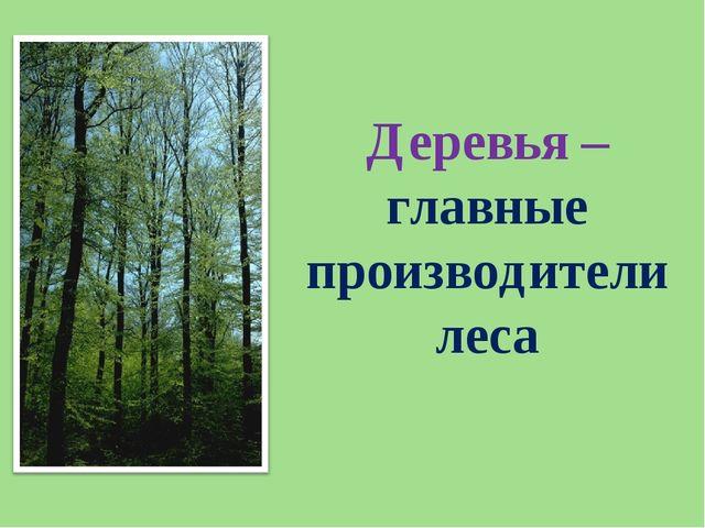 Деревья – главные производители леса