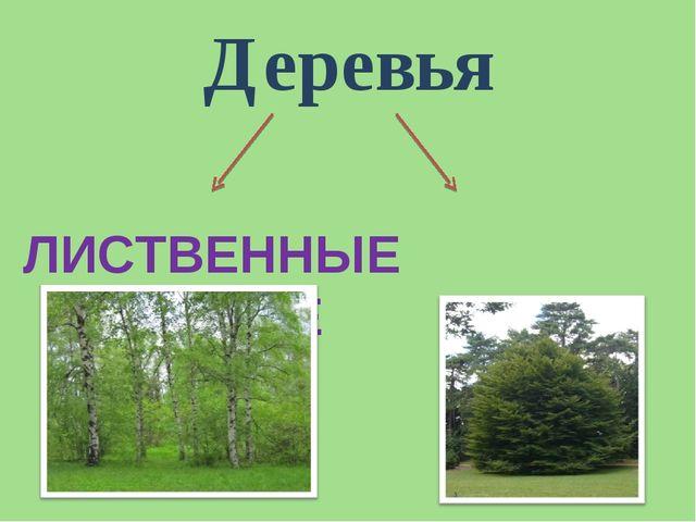 Деревья ЛИСТВЕННЫЕ ХВОЙНЫЕ